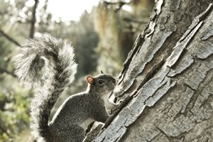 Hey there mister Squirrel !