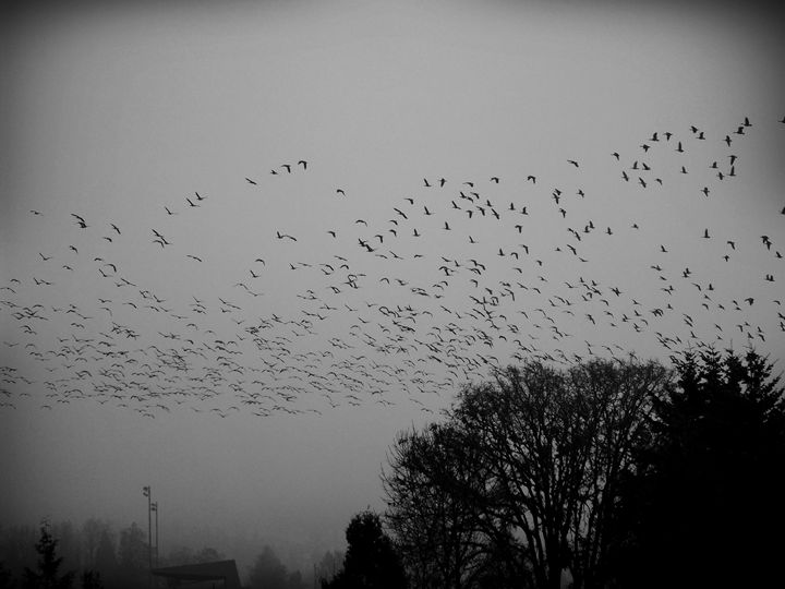 birds - ThomasW Photography