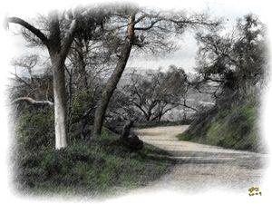 GP Trail 1