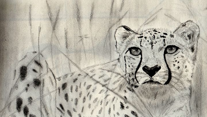 The eye of the cheetah - Graphite Experiments
