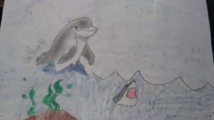 Dolphin and shark