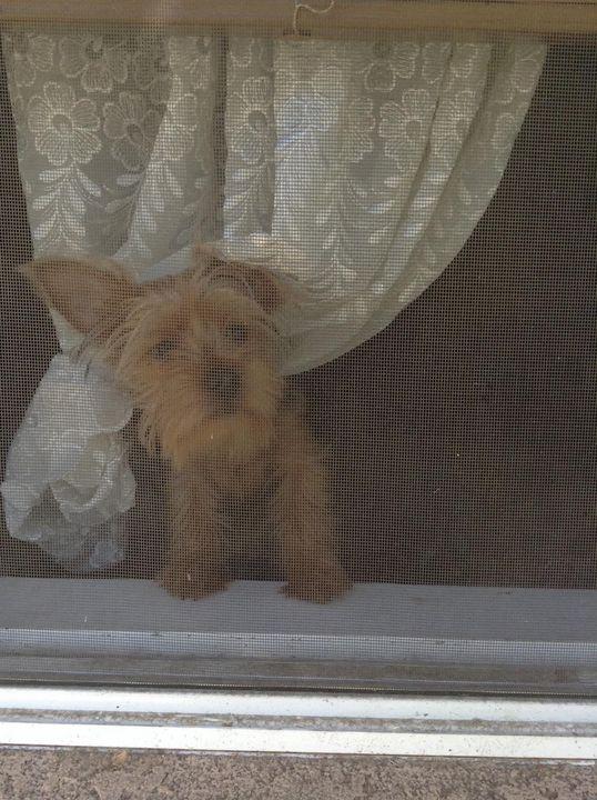 Curious Dog - Jose Virgen