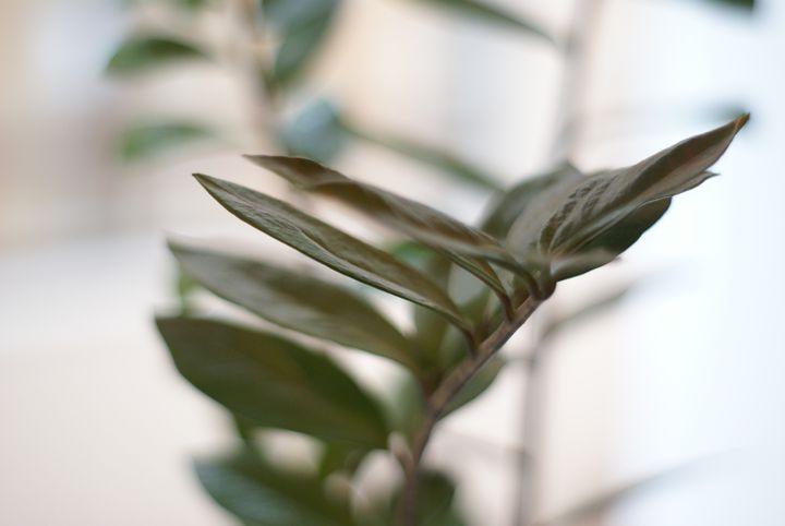 Leaf - adOre