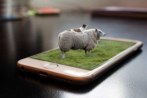 Pasture Call