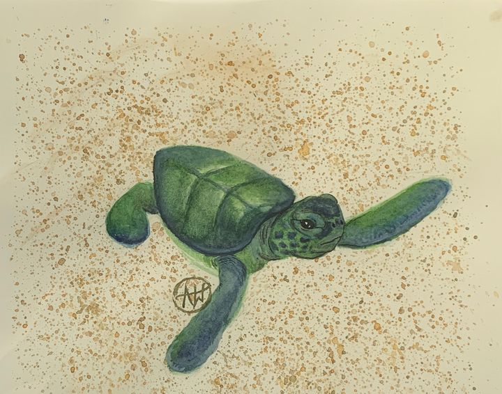 Baby Sea Turtle - Angie Worlton