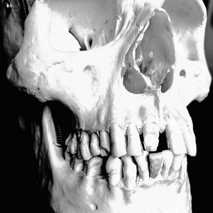 Black and white skull - BambiBeen