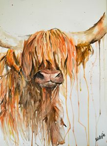 Highland Cow One