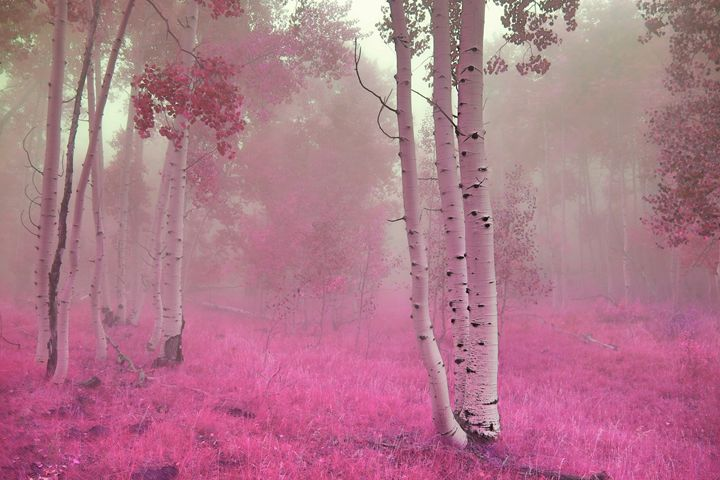 Color Me Pink - Robert Fein Photography
