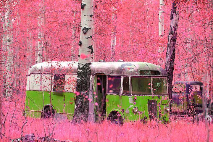 Green Bus - Robert Fein Photography