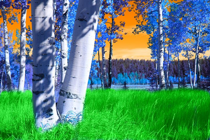 Mixed Seasons - Robert Fein Photography
