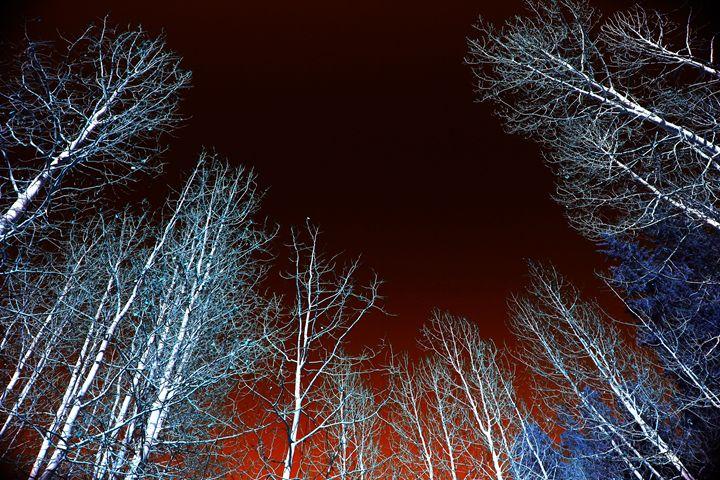 Tree Lights - Robert Fein Photography