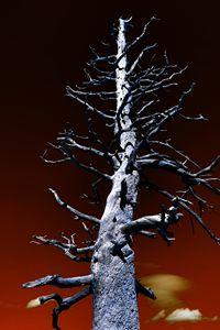 Leafless Wonder - Robert Fein Photography