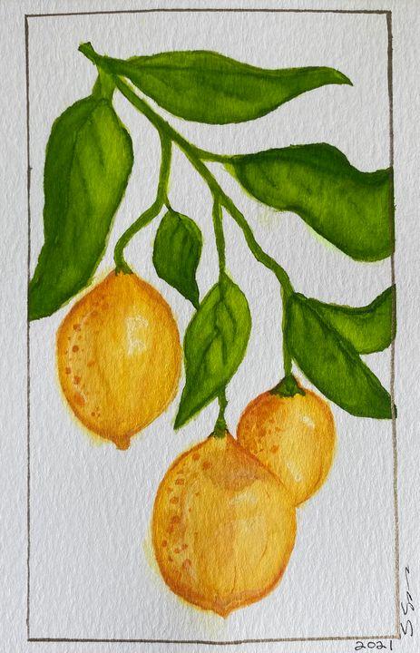 Lemon Vine - stephspiroff
