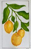 Lemon Vine prints