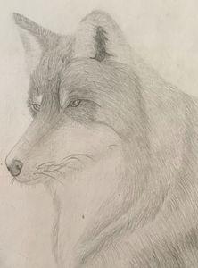 Sky the Wolf