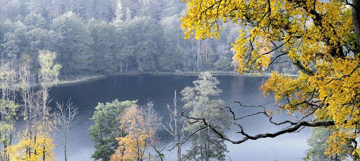 Beautiful autumn park - Sergejus Lamanosovas - Severas