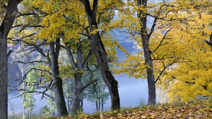 Mellow autumn - Sergejus Lamanosovas - Severas