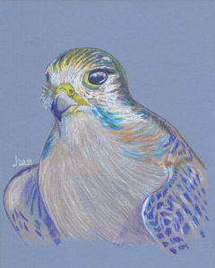 Falcon's eyes