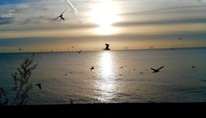 Watery sun and birds in flight