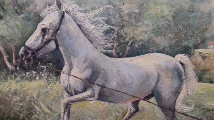 Horse in the nature - Ana Stupin