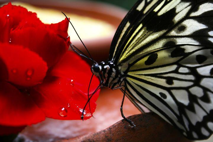 butterfly - avuc