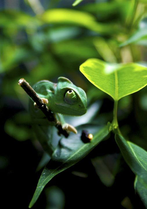 Leaft - avuc