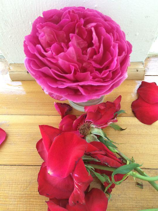 Roses - Jaci Kajfas