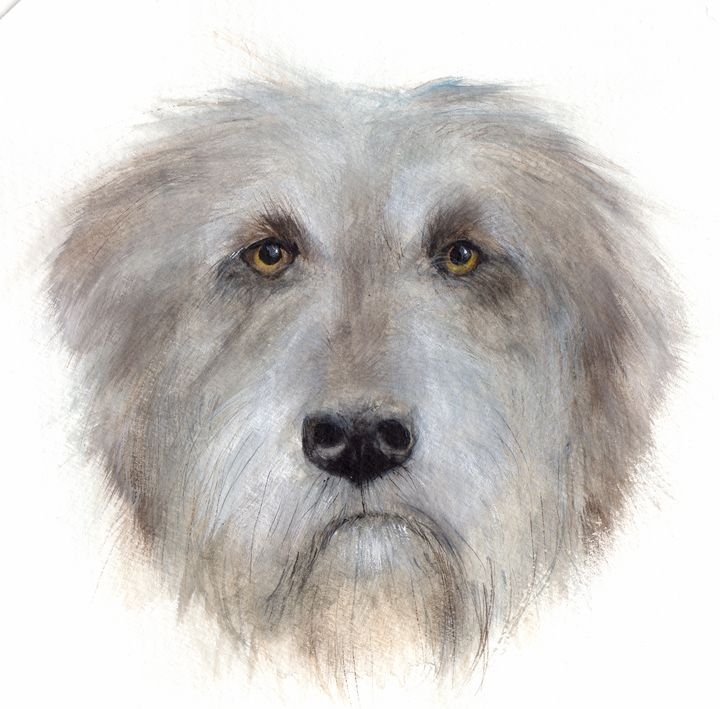 Irish Wolfhound watercolor portrait - Julia Gareeva Art