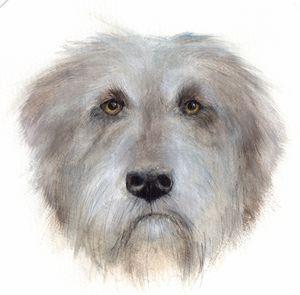 Irish Wolfhound watercolor portrait