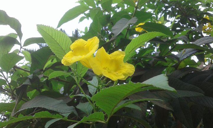 Yellow flower - art show