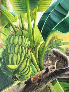 Banana and squirrel