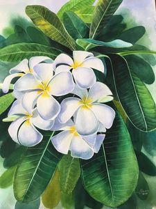 Plumeria (Kalachuchi)