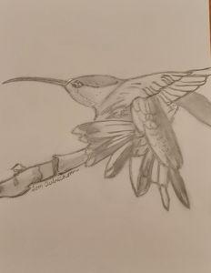 Hummingbird fluff