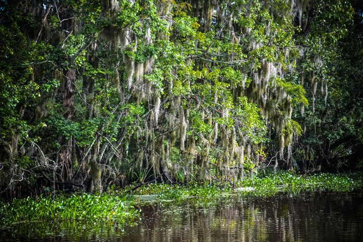 Swampy Moss - BMG Photography