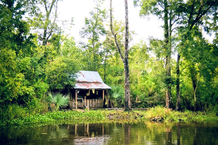 Home n the Swamp - BMG Photography
