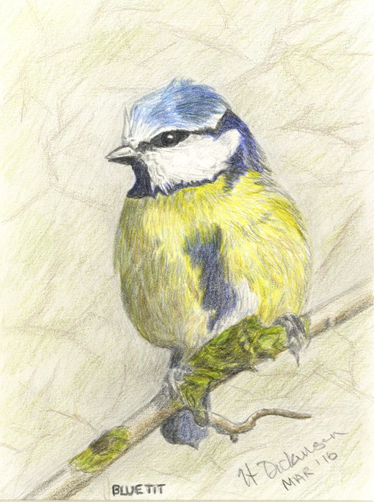 Blue Tit - Down To Earth Artwork