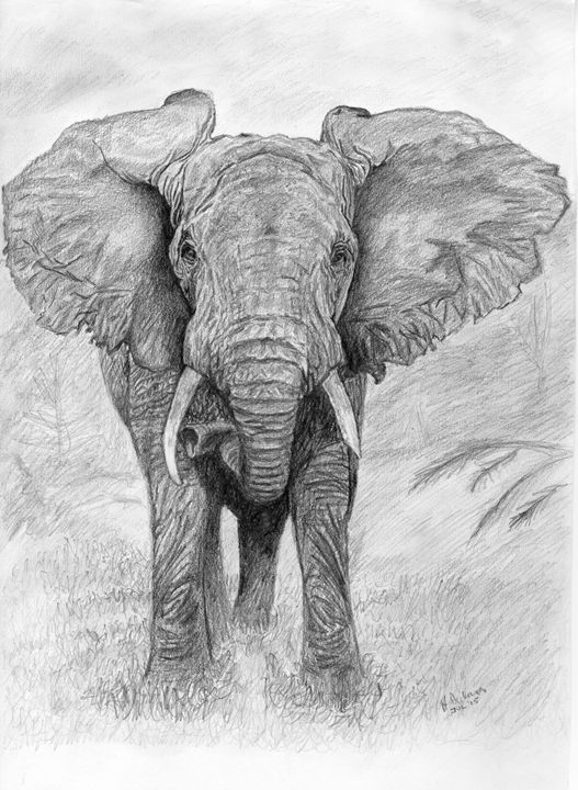 African Elephant - Down To Earth Artwork