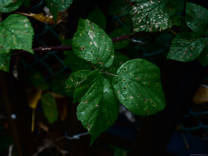 Leaves - All Men Must Paint