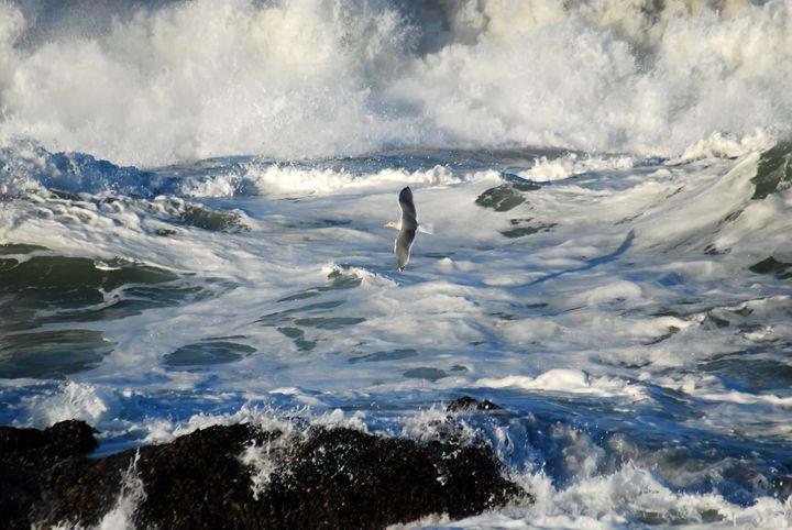 Gull Flying Over Surf - Mike Ross Original Oils