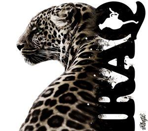 Cheetah - Photo Design AJ