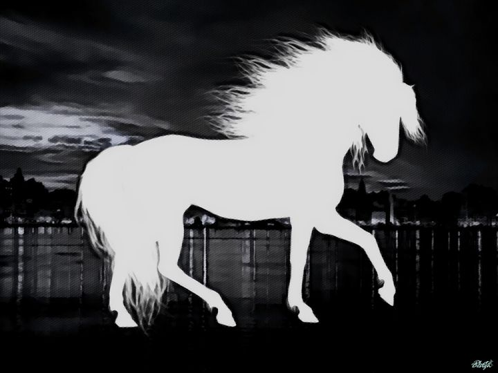 Black and white horse portrait - Photo Design AJ