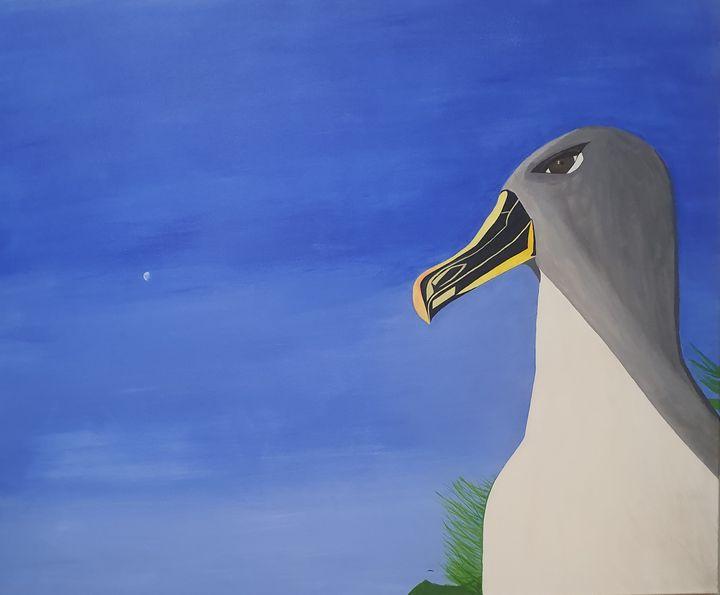 albatross - ayman ayoobi