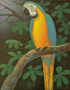 Macaw in Forest