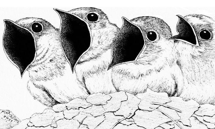 Four chicks - Mixt Villars