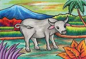 A Buffalo in the rice field