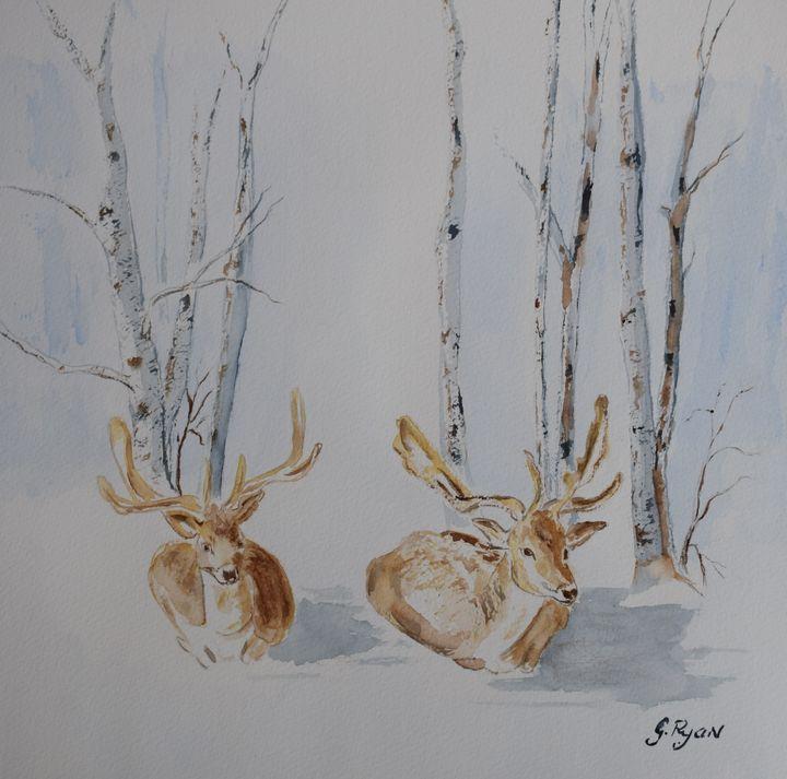 Snowy Deers in the Park - G.Ryan ( Geraldine )