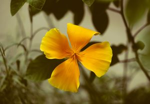 Yellow vintage flower