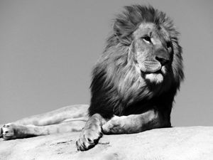 The King (B&W)