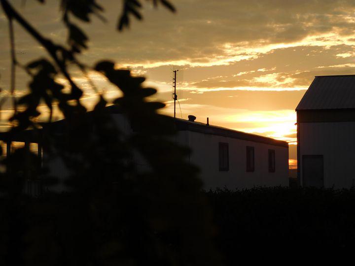 Tree sunset - MagOlivia