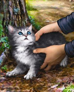 Boy Finds Kitten in the Woods